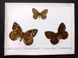 Joanny Martin 1902 Antique Butterfly Print 14